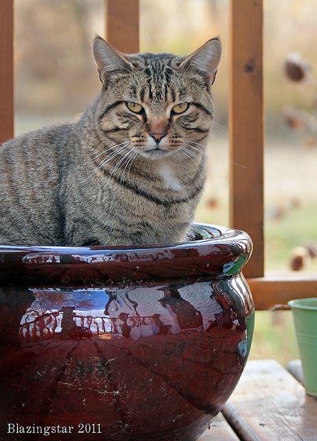Liz ; Her New Favourite Spot... or new favourite pot? [ photo credit: Liz (Blazingstar) ] on flickr.com