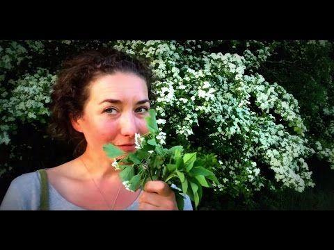 Jedlé jarní bylinky - hloh, bršlice kozí noha, bez černý, svízel přítula - YouTube