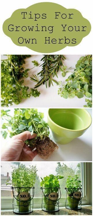 Tips for Growing Your Own Herbs #Gardening #herbgarden