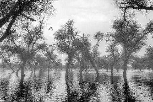 Forest, Flood and Flying