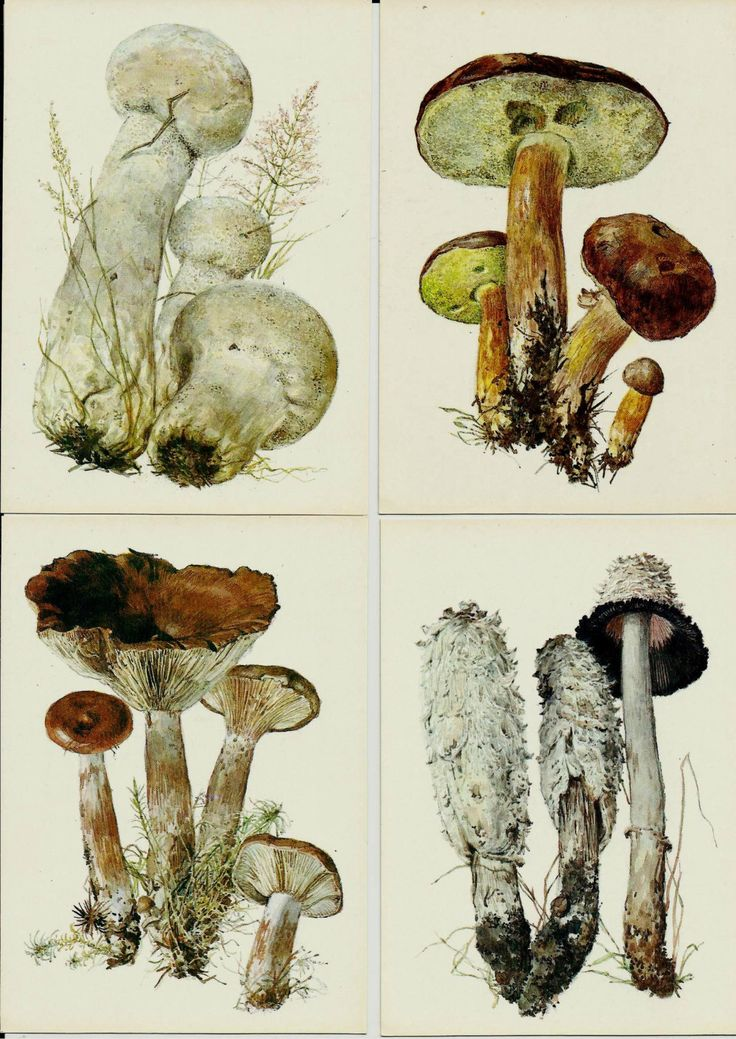 Mushrooms, set of 16, Vintage Russian Postcards, Drawings by Shpilenko,unused 1984 by LucyMarket on Etsy