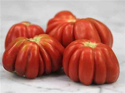 """Gezahnte Tomato 80 days. Here is a lovely paste-type, originating in Naples, Italy, but arriving by way of Frau Isabella Buhrer-Keel of Basil, Switzerland. Lavishly pleated fruits come in all sizes up to 6 ounces, sometimes a bit more. The name means """"toothed"""" in German, and slices certainly present this appearance. Semi-hollow fruit are firm and mild-tasting; great for stuffing. Very productive, even in hot, dry condition."""