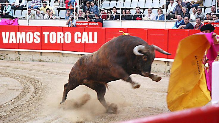 Corrida de toros, Rejoneo plaza de toros Cali Colombia feria taurina, Fe...