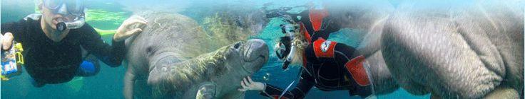 Bird's Underwater Manatee Tours - Kayak Rentals