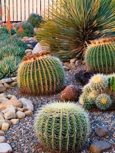 102 best images about Succulent and Cacti landscape on