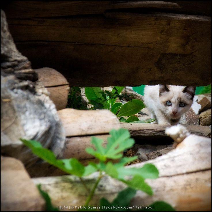 [2014 - Quintela de Lampaças - Portugal] #fotografia #fotografias #photography #foto #fotos #photo #photos #local #locais #locals #animal #animais #animales #animals #gato #cat #europa #europe