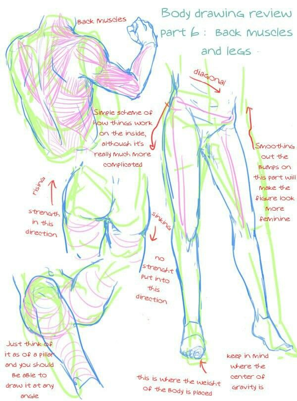 how to draw human body proportions
