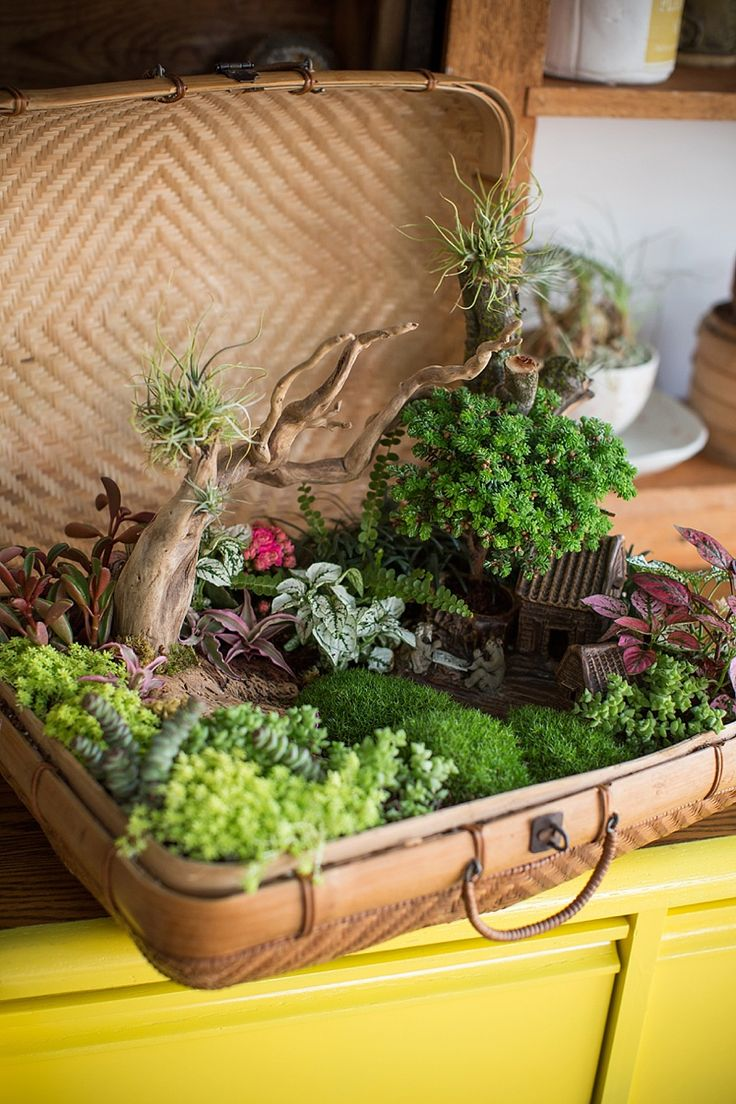 a perfect tabletop Zen garden in vintage Asian bamboo basket.  designer/Roxanne Kim-Perez