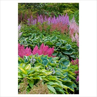 Astilbes With Hostas