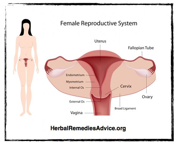 male and female reproductive disorder balanoposthitis Learning about the female reproductive system both the male and female reproductive systems are essential for reproduction polycystic ovary syndrome is a hormone disorder in which too many male hormones (androgens.