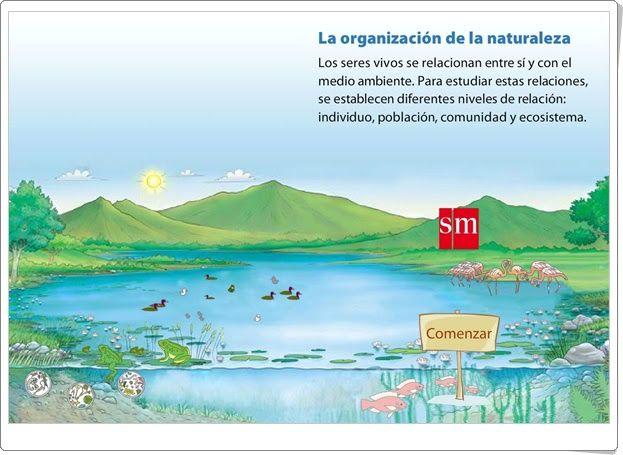 La organización de la naturaleza (Animación interactiva de S.M.)