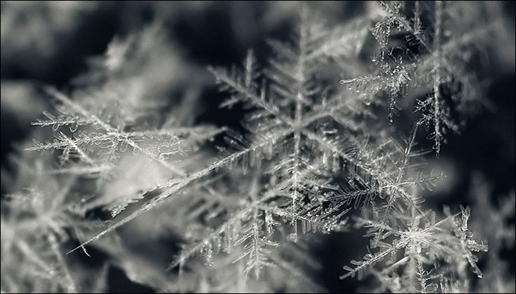 Fresh Snow Flakes ....: Cold Outside, December, Winter Wonderland, Snowflakes, Children, Snow Flakes, Fractals, Interesting Patterns, Cold Weather