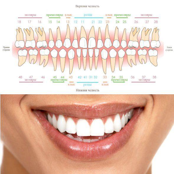 счет зубов в стоматологии картинки инструкция картинками, как