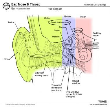 external ear anatomy