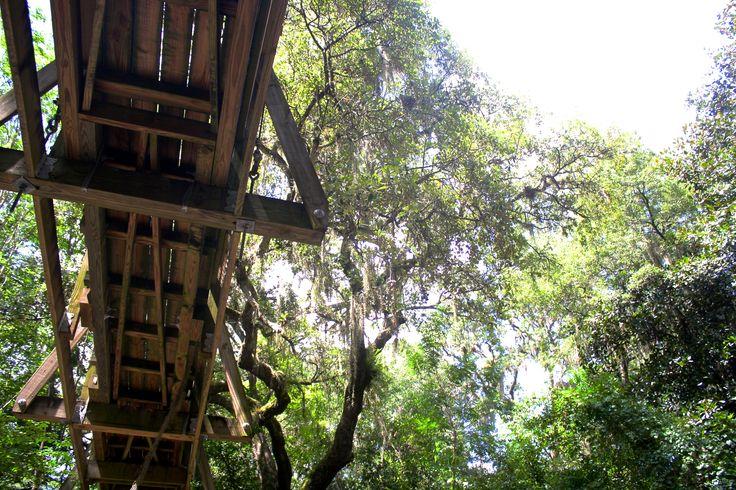 ravine gardens explore florida trail hikes florida hiking