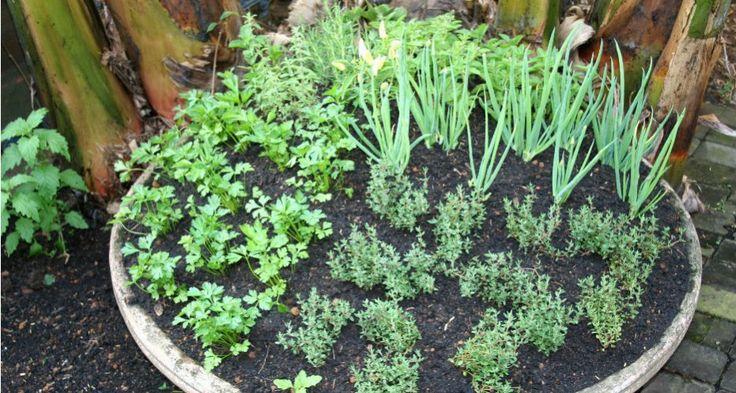Veja aqui como ter uma horta orgânica em casa com alecrim, coentro, manjericão, salsa, etc.! Tudo adubado naturalmente!