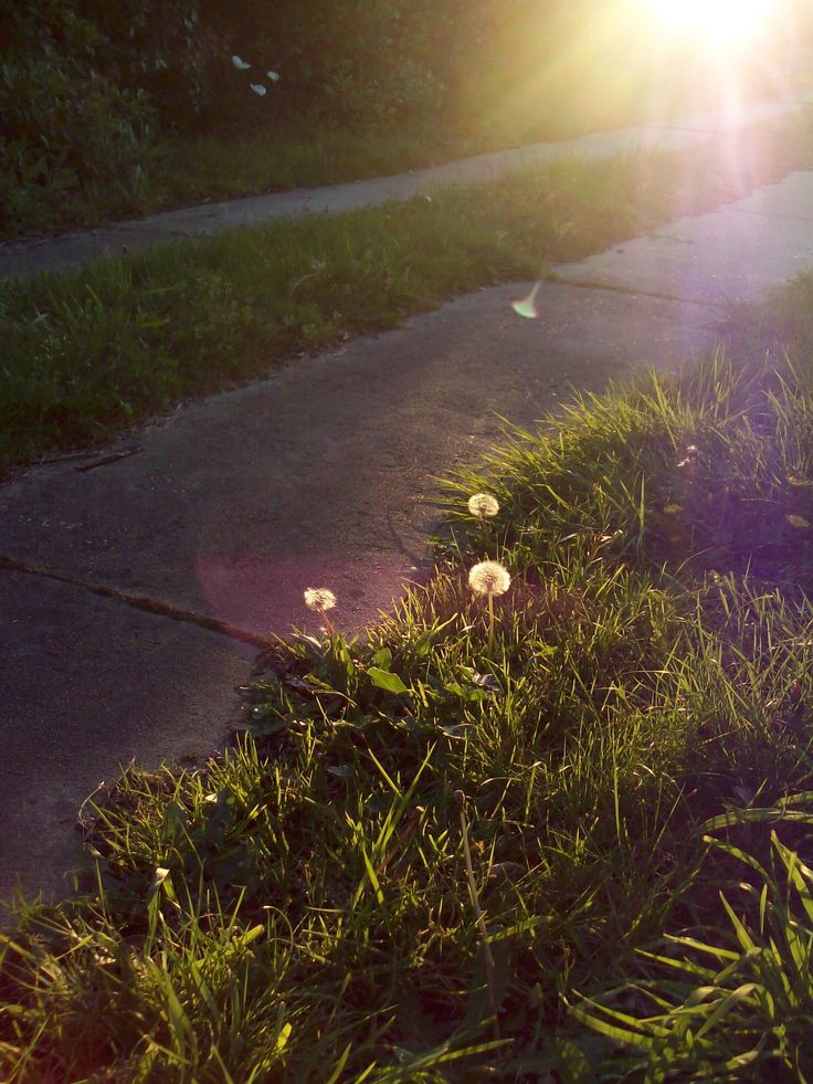 """I thought these supposed """"weeds"""" looked enchanting so I took a picture of them with the brightness down."""