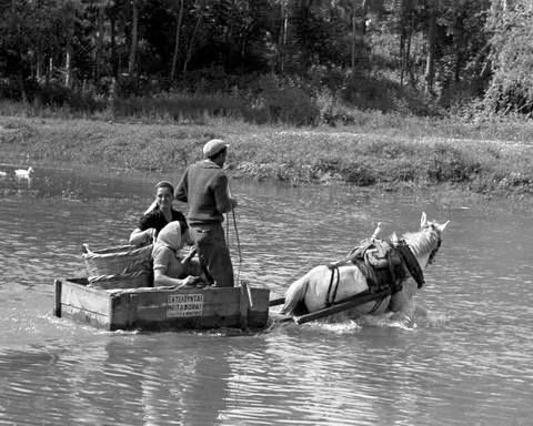Εκτελούνται μεταφορές στον Πηνειό.1963 φωτ.Τάκης Τλούπας