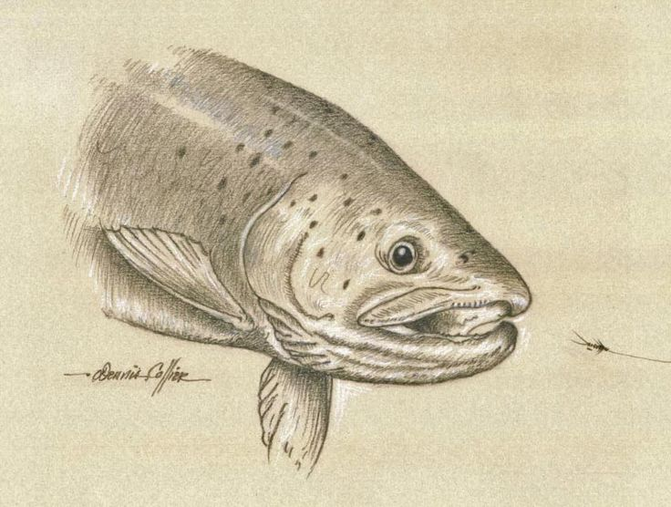 fly fishing drawing - photo #30
