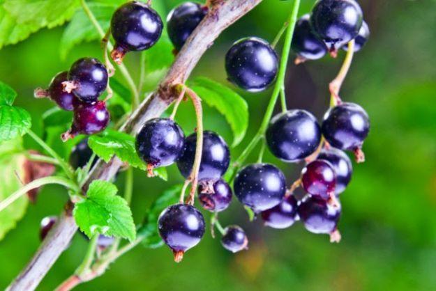 Cortisone naturale: un rimedio omeopatico   Tanta Salute