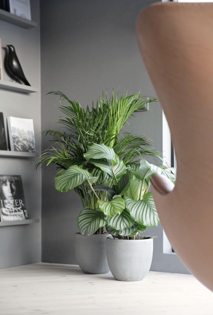 Green plants_concrete pots, Stylizimo house, grey, The Egg