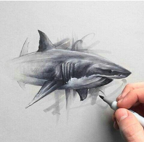Solwhiteside - Instagram shark drawing