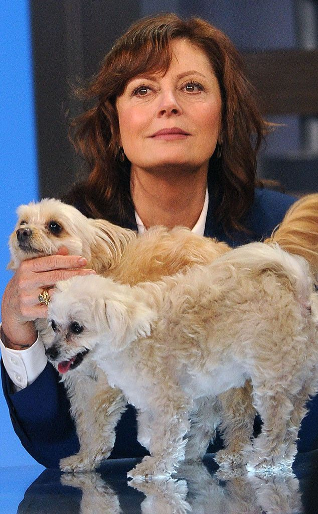 The actress travels with her dog to the set of Good Morning America in New York City. http://uk.eonline.com/photos/611/celebrity-pets-miley-cyrus-puppy-taylor-swift-s-cat-more/308098