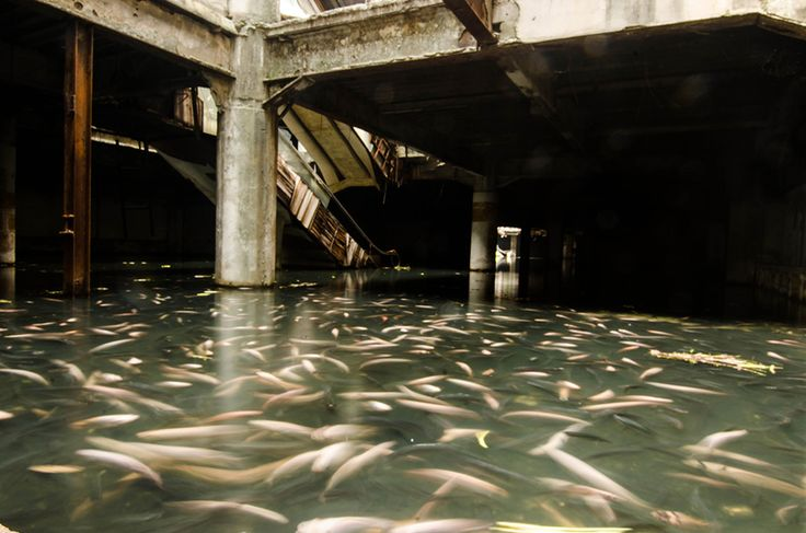 An Abandoned Bangkok Shopping Mall Hides a Fishy Secret  http://www.thisiscolossal.com/2014/07/an-abandoned-bangkok-shopping-mall-hides-a-fishy-secret/
