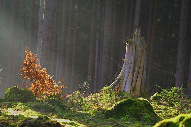 Magic Forest, Bos, Forest Fairy Tale, Mystiek, Mos