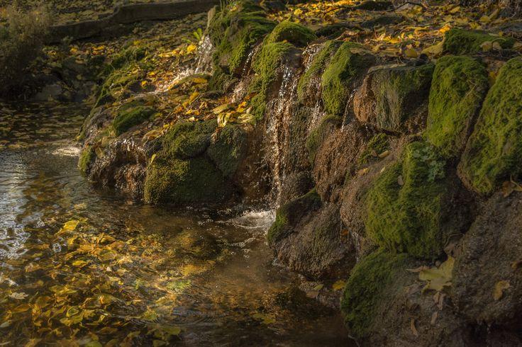 Rockery in autumn