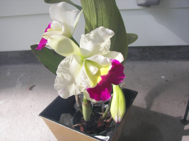 my orchidOrchids Stands