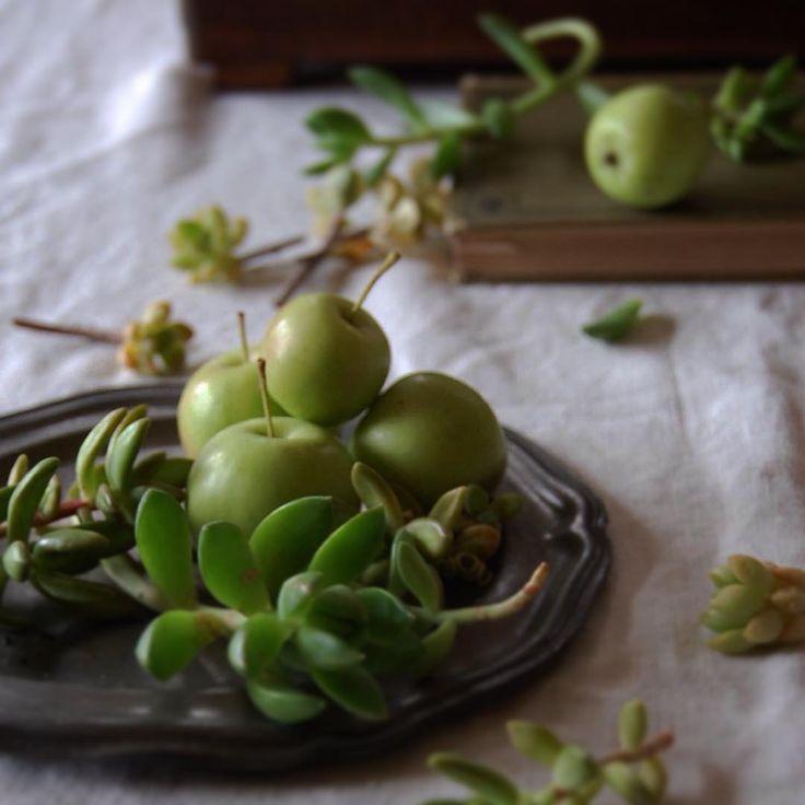 *林檎シリーズ… . . りんご連投させて頂きスミマセンデスm(_ _)m . . 長女とわたくし、、 りんご好き。 . 暑い夏は、お値段高くて; おいしくなくて; 寂しい思いをしていました。 . 南国には、りんごはない。 (前pic.では南国モードの中に登場させる荒業やっちゃってますが;^_^A) . ここは日本。 りんごのおいしい季節が、 これからやってきます。 . .  こちらは観賞用の姫りんご。 残念ながら食べられません; . 大好きな、フジりんごが待ち遠しい、娘とわたくしです。 . . . #暮らし#グリーン#多肉植物 #りんご#antique#洋書#pewter#花のある暮らし #flower