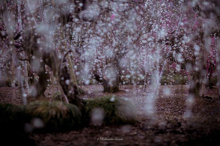 Hidenobu Suzuki Captured Spring In Japan