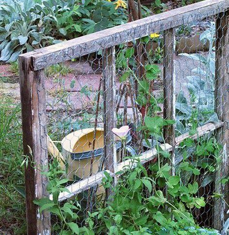 Chicken wire stapled to old window frame = trellis.