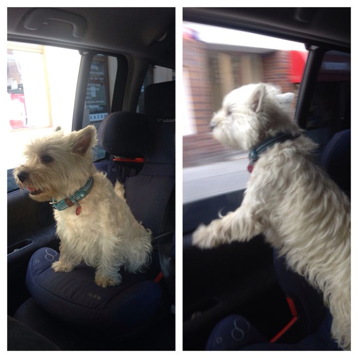 Monty in the car