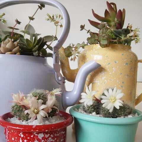 #Cactus con flores, pava, cafetera y mates en bellos colores. Yordaki matecitos con alma