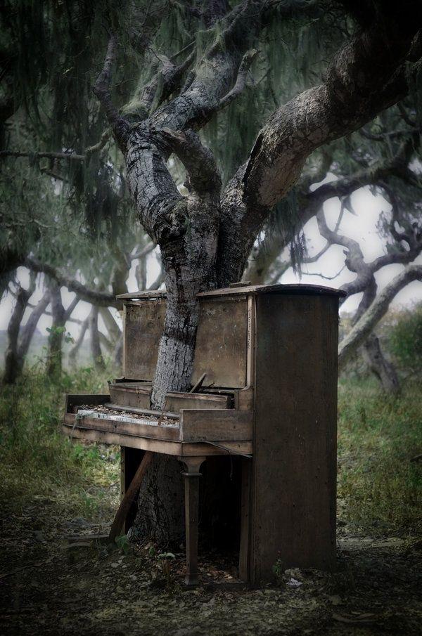 bluepueblo:  Piano Tree, Monterey, California photo via besttravelphotos