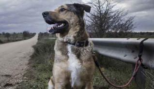 Las protectoras elevan a medio millón los perros abandonados cada año en España