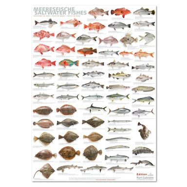 Plakat Meeresfische