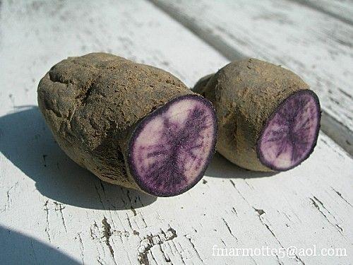 Planter les pommes de terre. Violine de Borée. Ardèche.