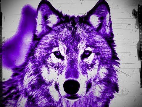 ▶ wycie wilka - wolf sound - bruit loup - YouTube