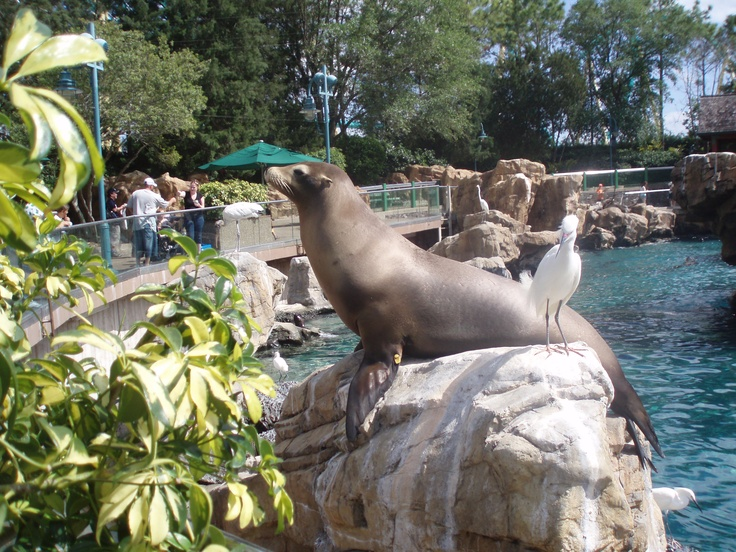 Sea World Orlando Flordia. Missing the sea lions!! And the birds who steal their food ;)
