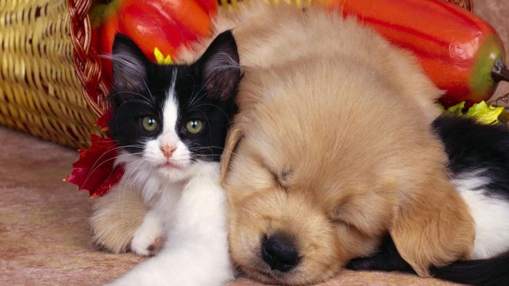 Local Pets Australia  https://www.youtube.com/watch?v=AYRjMOMhmqA  Free Hot Classifieds Beautiful ADs Special Services  http://thehotwire.org