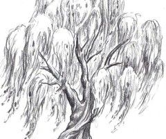 Coloring Page Willow Tree. weeping willow tree tattoos  love this 79 best Tats etc images on Pinterest Ideas for Small