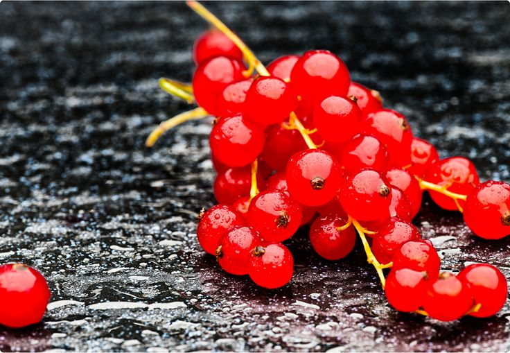 red currant /Hania Pawlowska