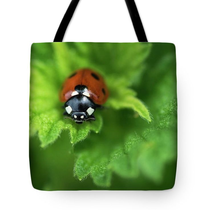 Ladybird Is A Symbol Of Well-being, Goodness And Peace Tote Bag by Irina Safonova.  The tote bag is machine washable, available in three different sizes, and includes a black strap for easy carrying on your shoulder.  All totes are available for worldwide shipping and include a money-back guarantee.#IrinaSafonova#Works #FineArtPhotography #HomeDecor#IrinaSafonovaFineArtPhotography #ArtForHome #FineArtPrints #HomeDecor #Animal #bug   #Flora#Flower