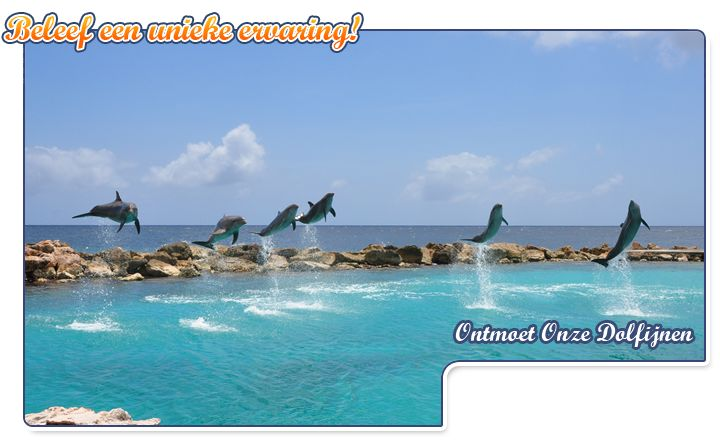 Swim with dolphins.  Curacao , check