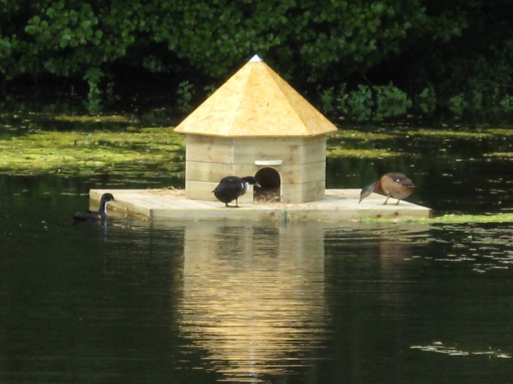 Floating Duck House | La Basse Cour B&B | Flickr
