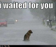 dogbuddies, my album, roses, comments, cutes, sayings, funny, i miss you, Sexy women, txt, quotes, arena1, sad, cute, animals, Misc, 1 love, Aminals!!, tags, text - -alone-street-rain-storm-waiting_large.jpg (JPEG Image, 500x289 pixels)