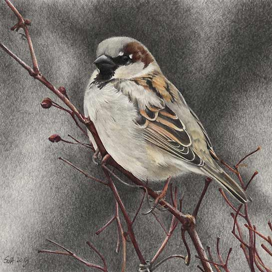 House Sparrow Bird Painting by artist Sue deLearie Adair